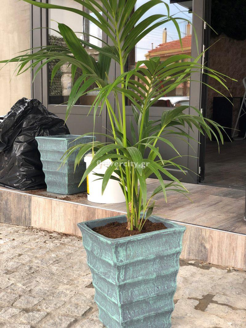 ΕΥ ΖΗΝ διατηρημένα φυτά