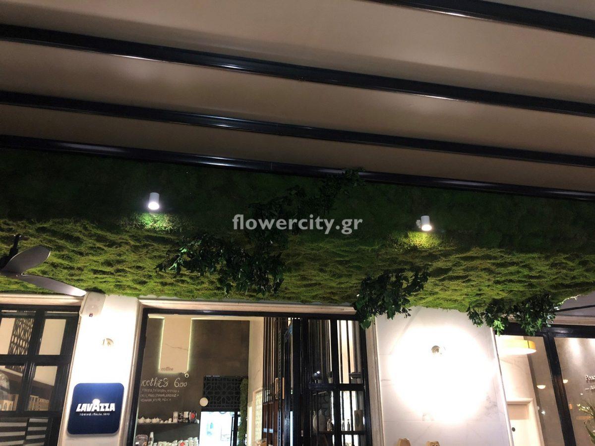 ΘΕΓΙΑ διατηρημένα φυτά