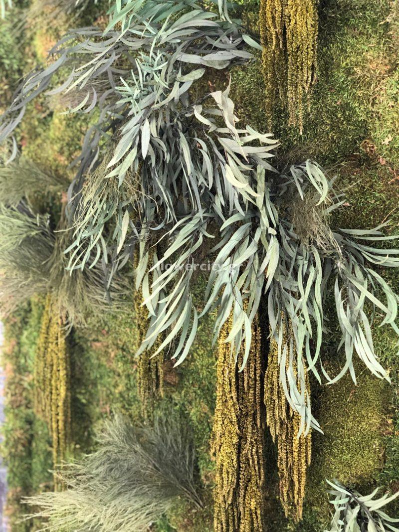 ΠΑΡΑΔΟΣΙΑΚΟ ΠΑΝΟΡΑΜΑ διατηρημένα φυτά