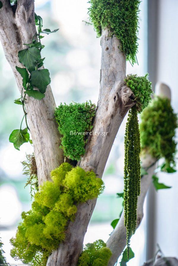 ΤΟ ΝΕΟΝ διατηρημένα φυτά