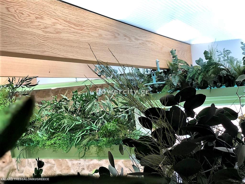 Χάλαρο διατηρημένα φυτά