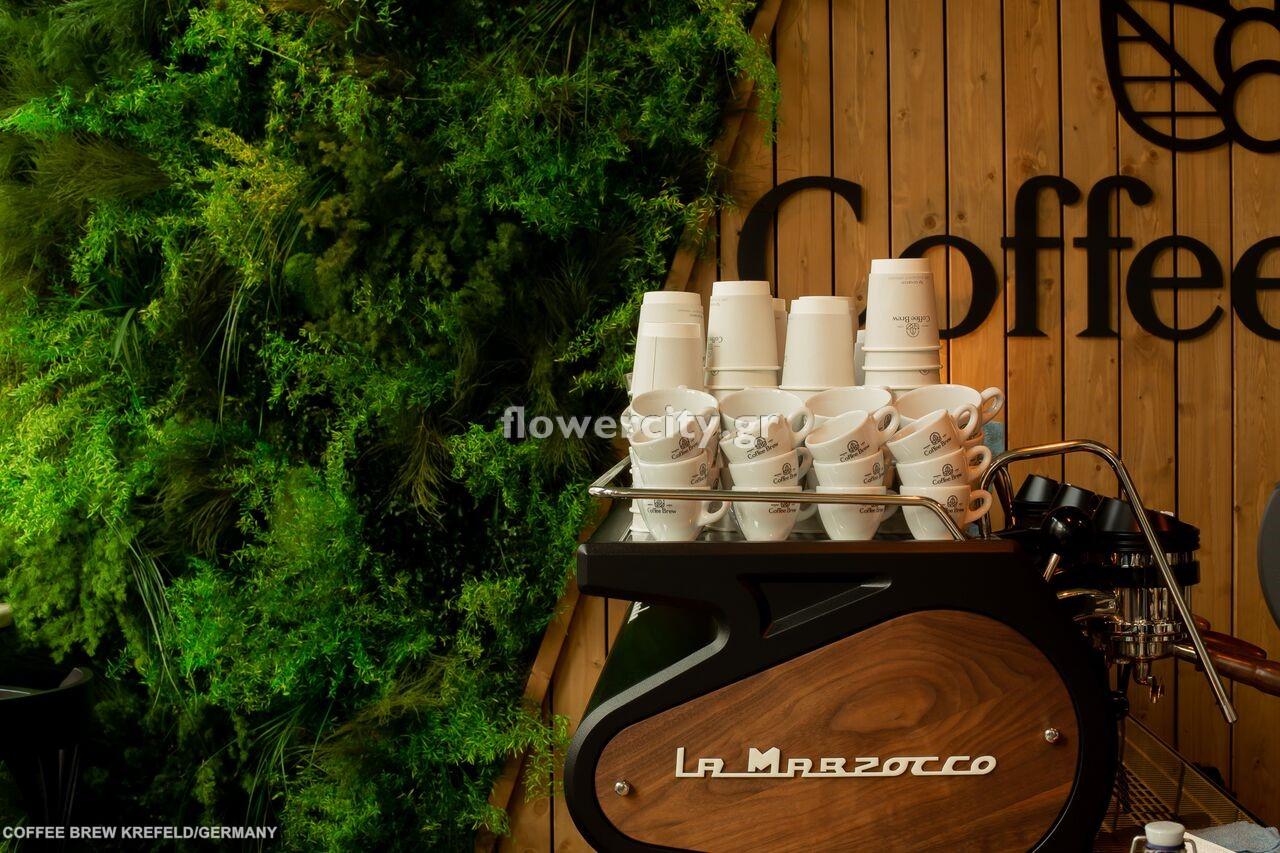 COFFEE BREW διατηρημένα φυτά