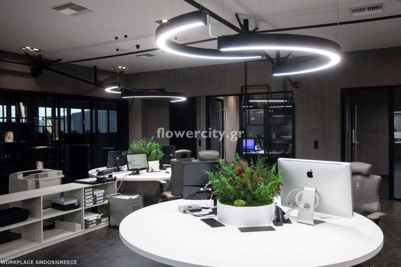 FLEXOPLATES διατηρημένα φυτά