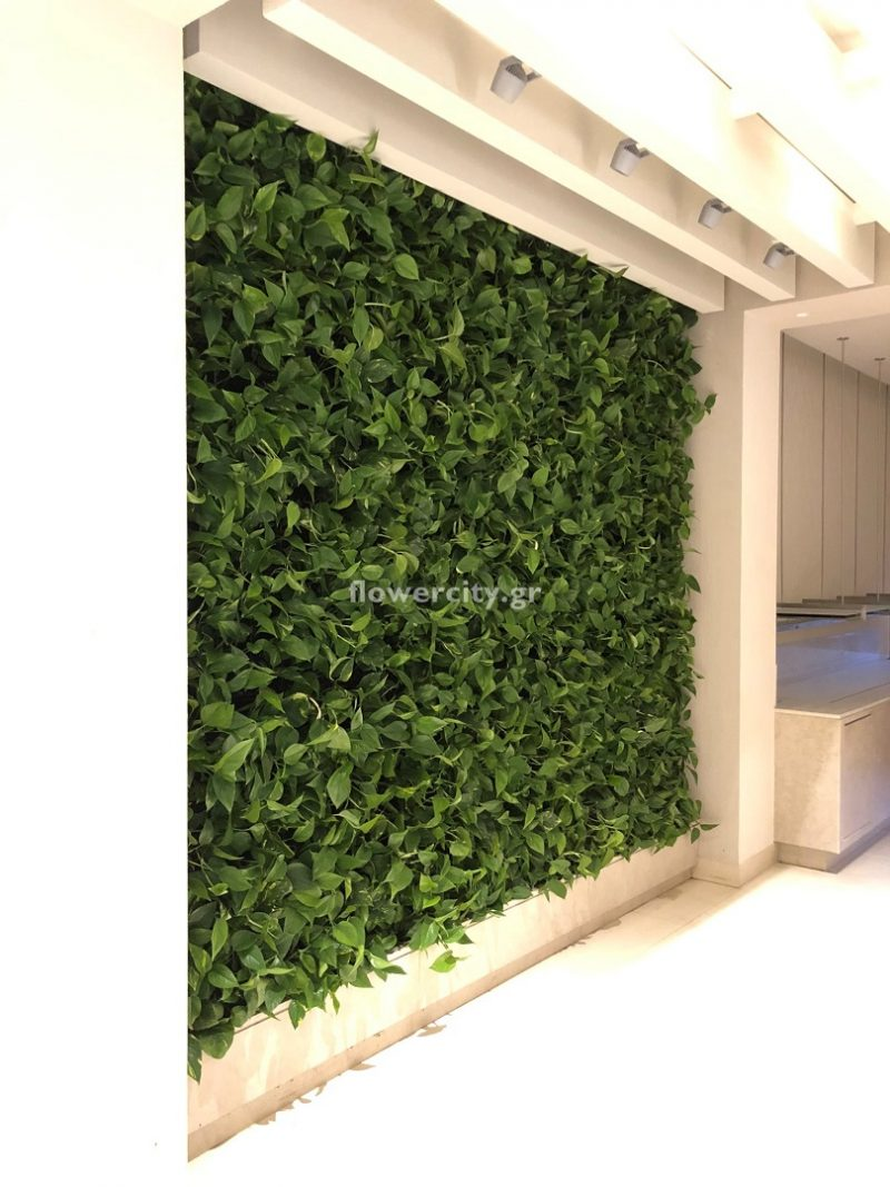 IKOS OLIVIA ζωντανά φυτά