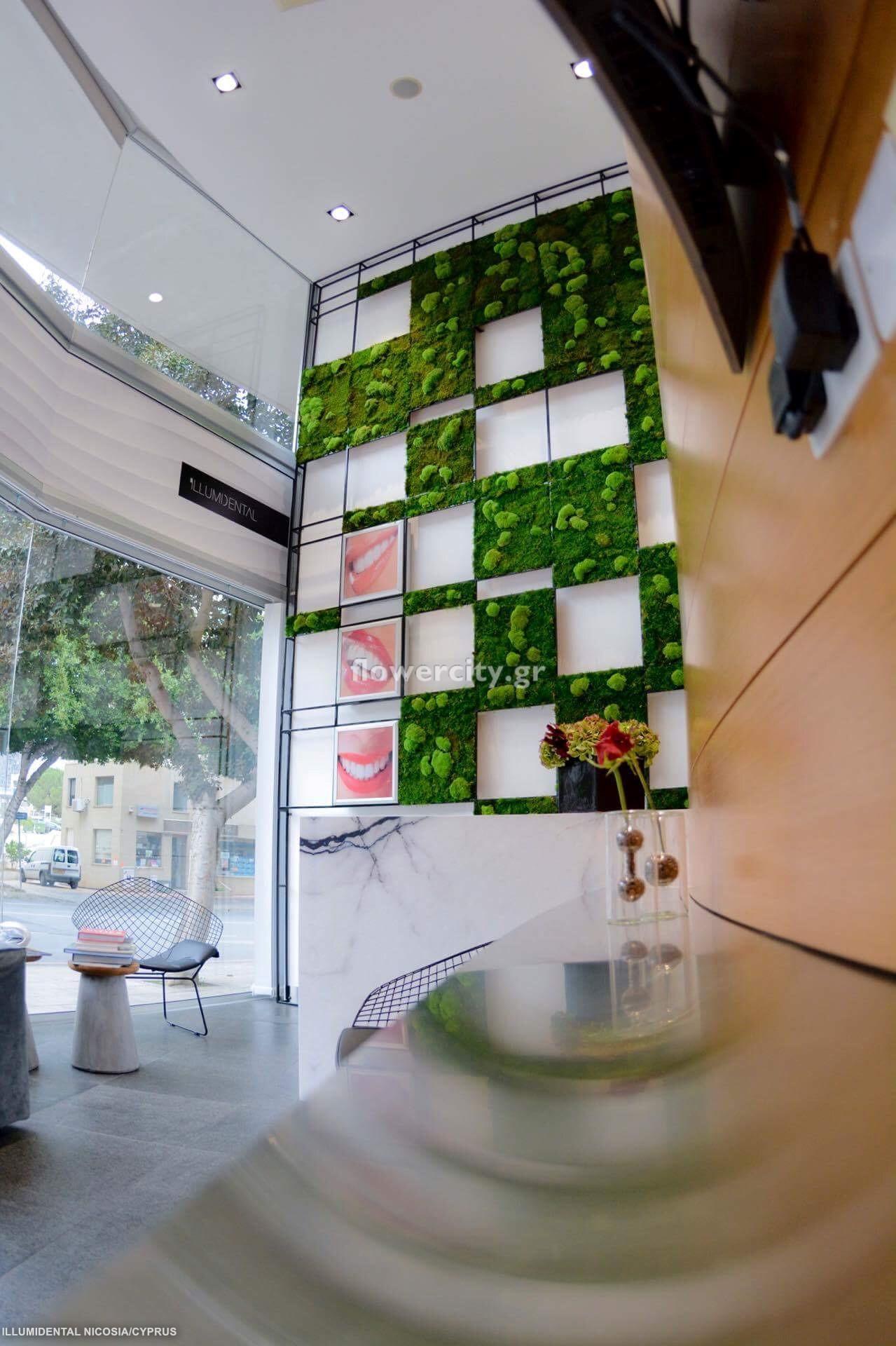 ILLUMIDENTAL διατηρημένα φυτά