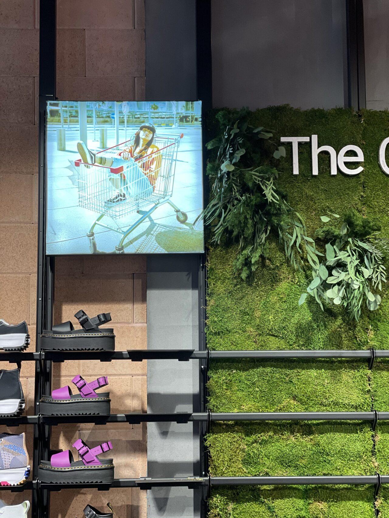 Sneaker10 διατηρημένα φυτά