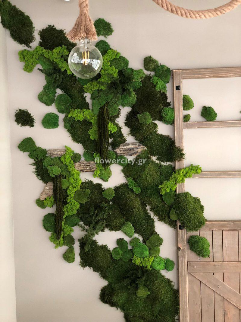 NONOS διατηρημένα φυτά