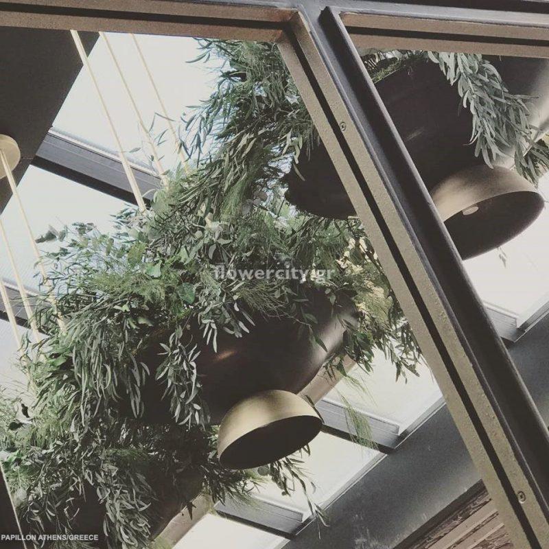 PAPILLON BISTRO διατηρημένα φυτά