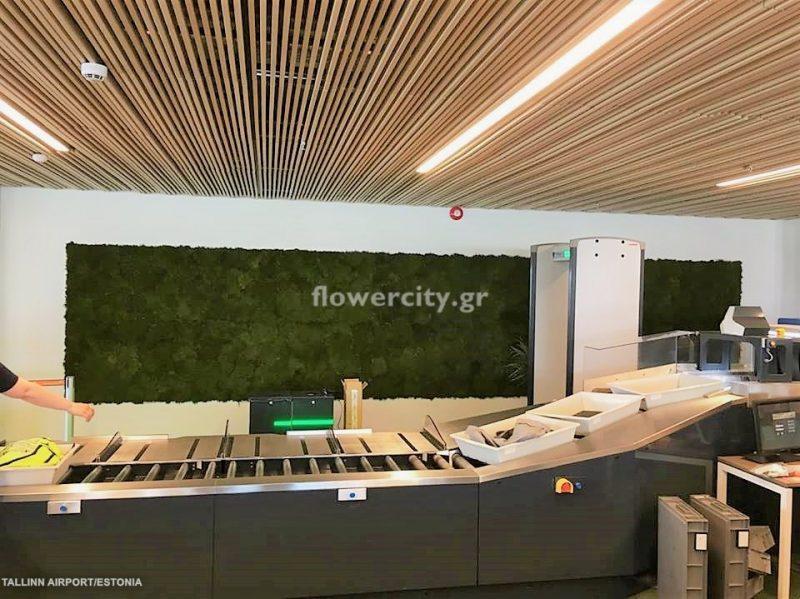 TALLINN INTERNATIONAL AIRPORT διατηρημένα φυτά