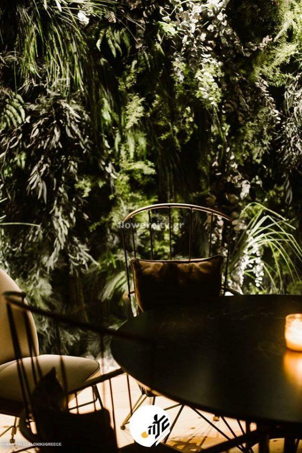 ZEBRA ESPRESSO διατηρημένα φυτά