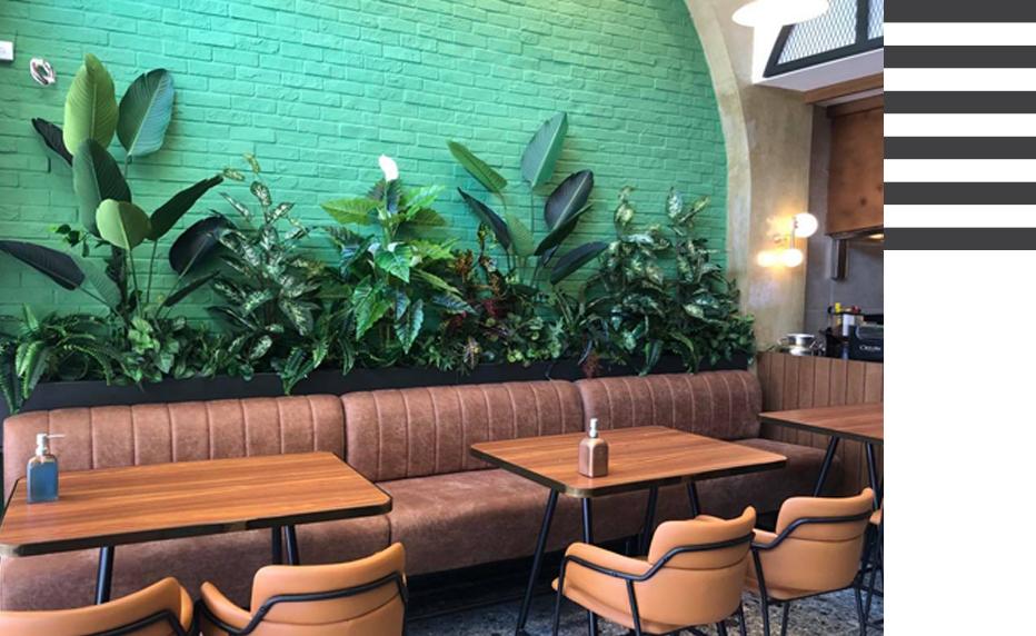 Flowercity φυτά εσωτερικού χώρου
